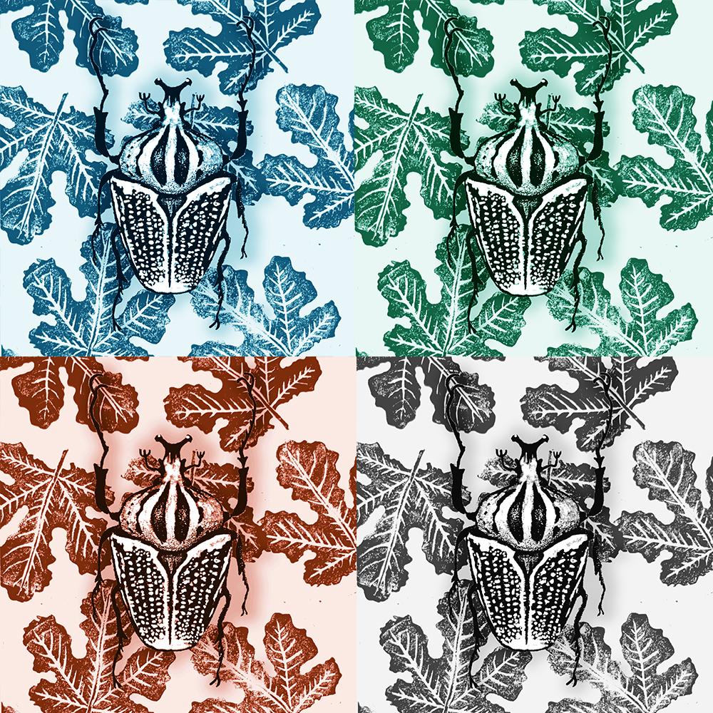 scarabées 4 couleurs