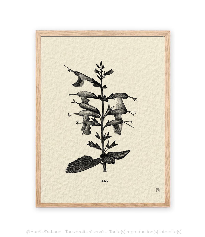 8 Salvia