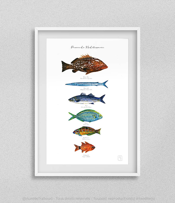 planche poissons méditerranée 1