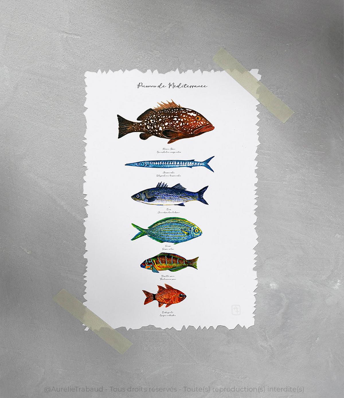 planche poissons méditerranée