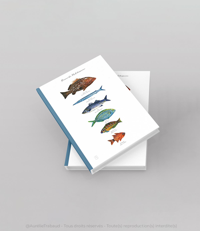 planche poissons méditerranée 4